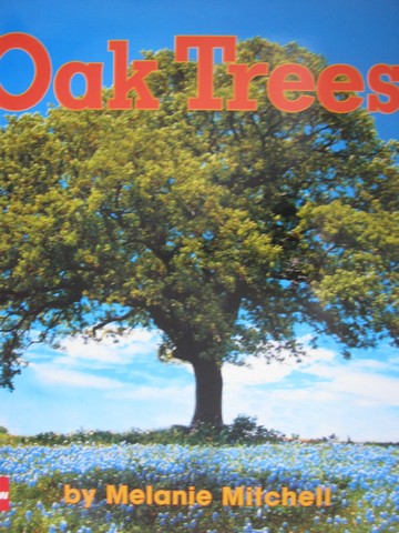 Oak Trees (P)(Big) by Melanie Mitchell