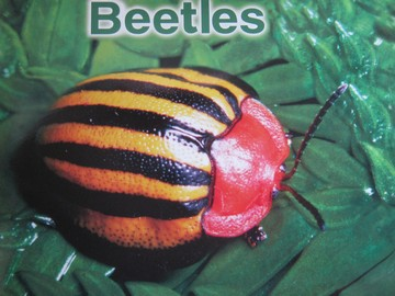 Beetles (P)(Big) by Edana Eckart