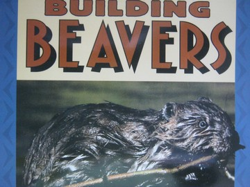 Reading Street K.6 Building Beavers (P)(Big) by Martin-James